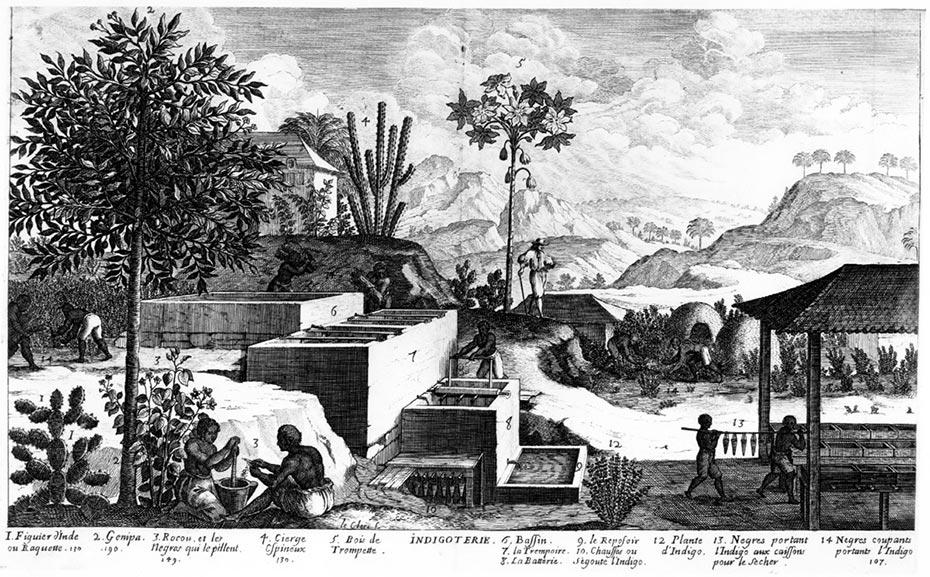 Indigotierie aux Antilles